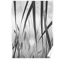 through the looking grass (bw) Poster