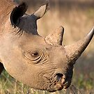 Black Rhino Profile by Michael  Moss