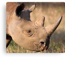 Black Rhino Profile Canvas Print