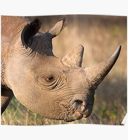 Black Rhino Profile Poster