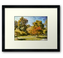 Maples In Summer Framed Print