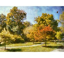 Maples In Summer Photographic Print