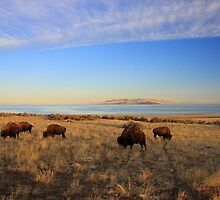 Where The Buffalo Roam by Gene Praag