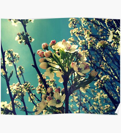 Tree Buds Poster