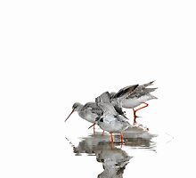 Spotted Redshanks on Ice by Tim Collier