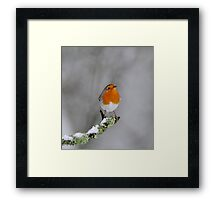 Robin and Snow Framed Print