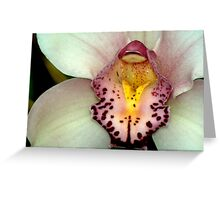 February Orchid  Greeting Card