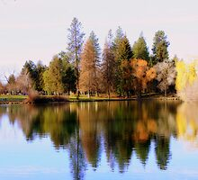 Tree Reflections #2 by Chappy