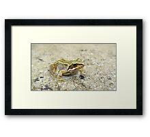 Common Frog Framed Print