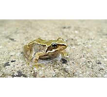 Common Frog Photographic Print