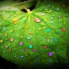 Colorful Rain by Susan S. Kline