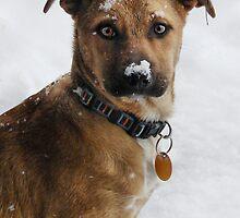 Snow Dog by Jamie Lee