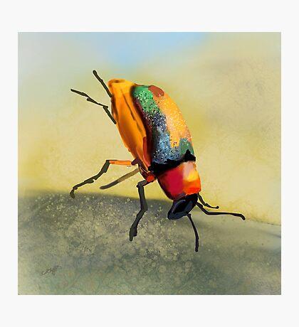 Acrobat Beetle Photographic Print