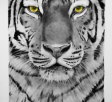Tiger Drawing - 2011 by charly