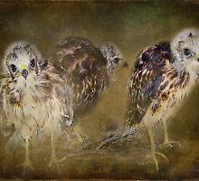 Redtail Hawk Babies by Kay Kempton Raade