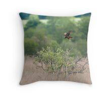 Hunting Marsh Harrier, Leighton Moss Throw Pillow