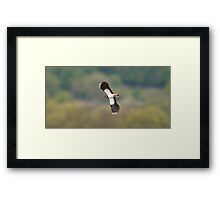 Lapwing Framed Print