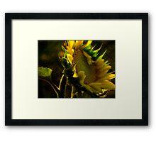 Sunshine for Anne Gitto Framed Print