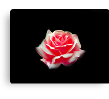 Rose Glow Canvas Print