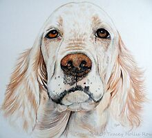 Spaniel by Tracey Hollis Rowe