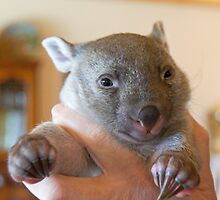 Tunna the Wombat Joey by Ron Co