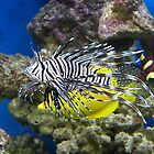 Lionfish by MartynJames