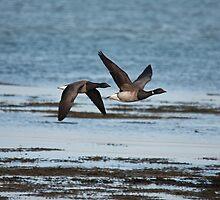 brent geese by Jon Lees