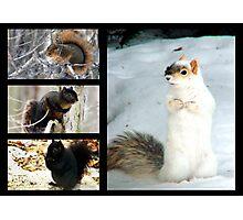 Squirrel Collage  Photographic Print