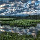 Spruce Bog by Bill Maynard