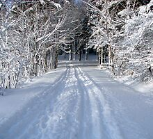 Acadia Carriage Road in Winter by Dan Hatch