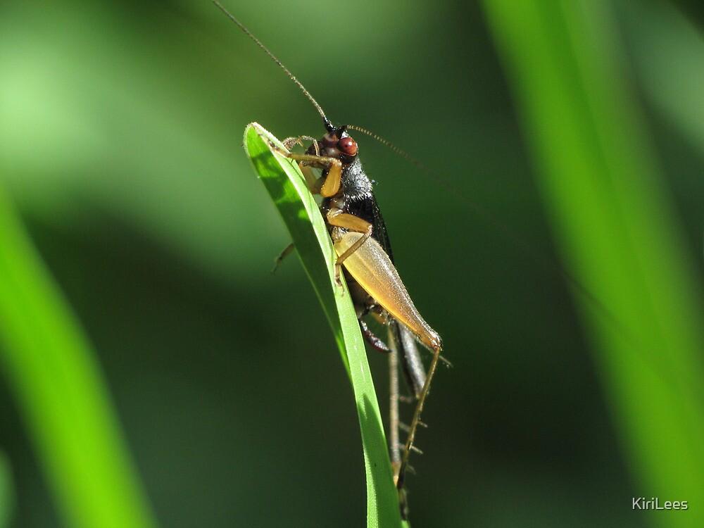 Grasshopper!!! by KiriLees
