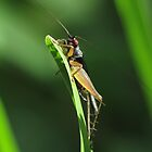 Grasshopper!!! by KiriLees
