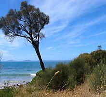 The Tree, Tasmania by Ali Brown