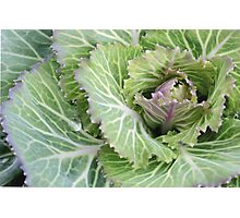 Fall Brassica Photographic Print