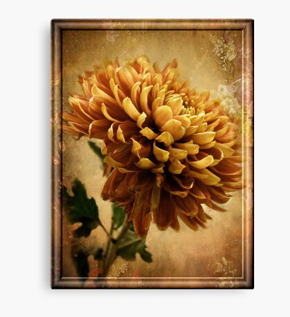 Vintage Chrysanthemum Canvas Print