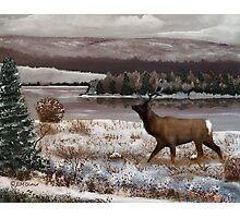 Winter Scenery Photographic Print