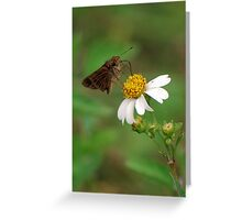 Brown butterfly on Spanish Needles Greeting Card