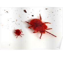 Red Velvet Mites Poster