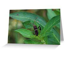 Leaf-footed bug on a leaf Greeting Card