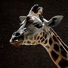 Giraffe by JuliaWright