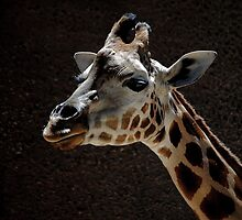 Giraffe by JuliaWright
