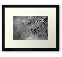 Tree silhouette on cloudy sky Framed Print