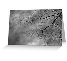 Tree silhouette on cloudy sky Greeting Card