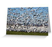 Snow Geese Take Flight Greeting Card