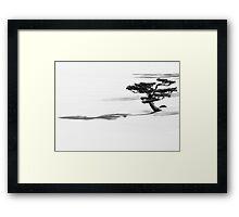 Shadow of the Bonsai Framed Print