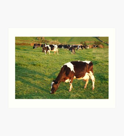 Holstein cattle Art Print