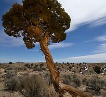 Starry Night: Twisted Juniper at Angel's Peak by Mitchell Tillison