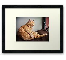 Is it Caturday yet? Framed Print