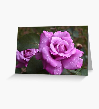 After the Shower- Paradise Greeting Card