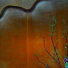Desert Rose by Sandra Guzman